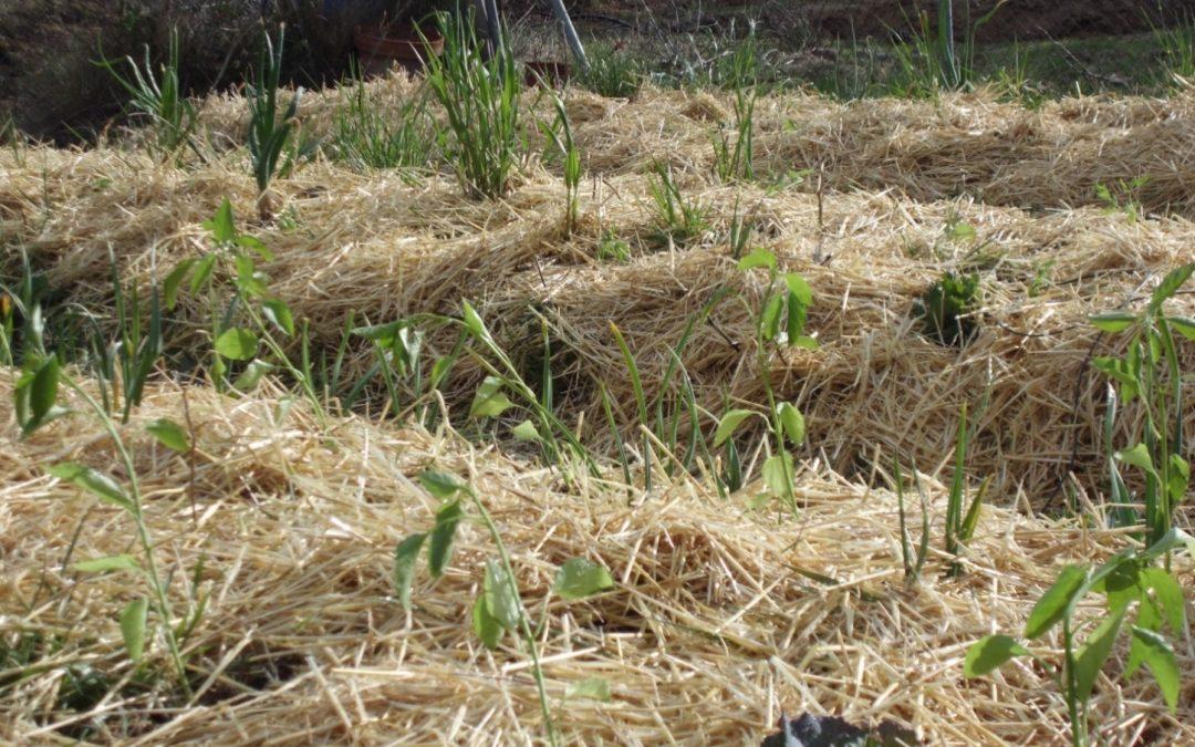 Crea tu primer huerto ecológico en Arcadia